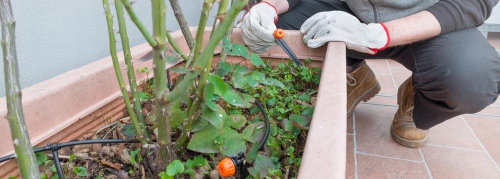 drip-irrigation-system-installation